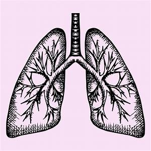 35  Trends For Drawing Of Lungs With Color