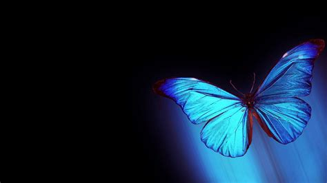 3d Wallpapers Butterfly by 3d Butterfly Wallpapers Backgrounds Top Images Free