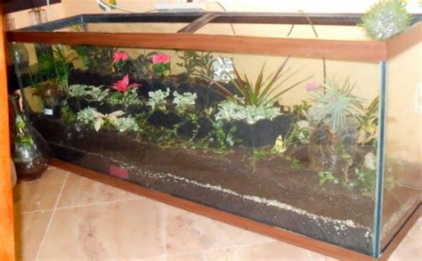 fish tank ideas  pinterest fish tanks aquarium