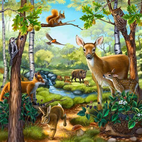 wertheim illustration animals plants