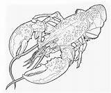 Lobster Coloring sketch template