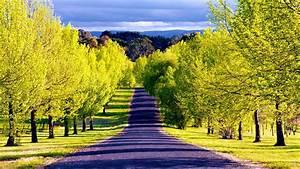 Road, Tree, Nature, Sky, Wallpaper, In, Hd