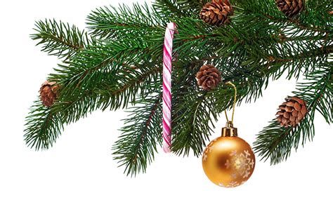 images christmas new year tree balls branches conifer cone