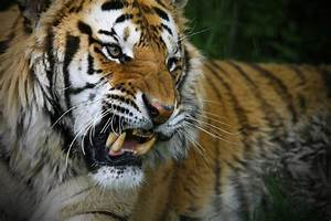 13 of the World's Most Aggressive Animals