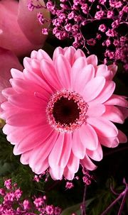 Pin by Angi on I L O V E... | Pink flowers, Pink, Pink rose