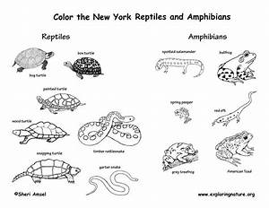 Reptiles And Amphibians List
