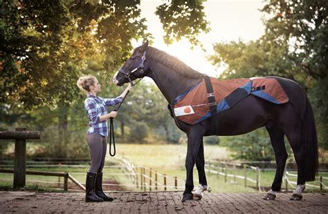 bemer horse set physikalische gefaesstherapie bemer