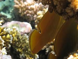 Queue De Poisson Voiture : queue de poisson photo et image images sous marines nature images fotocommunity ~ Maxctalentgroup.com Avis de Voitures