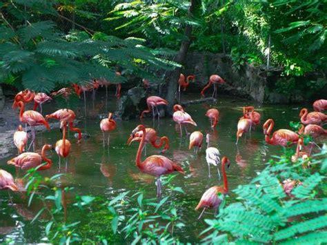 ardastra gardens zoo  conservation center nassau