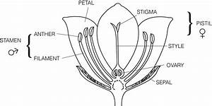 Parts Of Flower Diagram