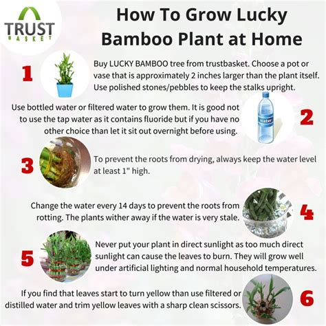 how to grow bamboo 1000 ideas about bamboo plants on pinterest lucky bamboo lucky bamboo plants and bamboo