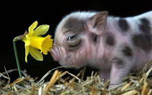 Funny Wallpapers: Very cute baby animal pictures