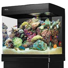 aquarium d eau de mer prix cr 233 er un aquarium d eau de mer trouver l 233 quilibre animalerie truffaut conseils aquariums et