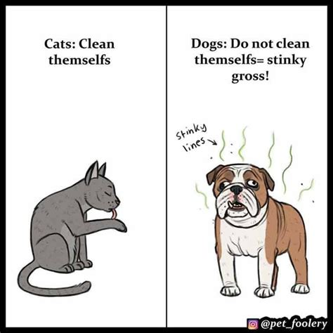cats dogs than better why comics dog explaining pet foolery cat funny hilarious welovecatsandkittens reasons superior veterinary clinic domingo paste