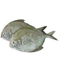 pomfret fish  mumbai maharashtra pomfret cashimara
