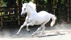Au Cheval Blanc : chevaux de coeur cheval blanc ~ Markanthonyermac.com Haus und Dekorationen