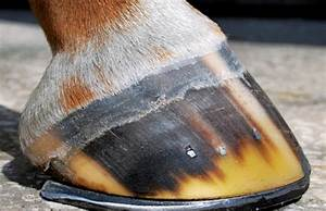 The Ideal Hoof Angle Depends On The Horse