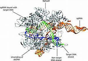 Crispr  Cas9  A Historical And Chemical Biology Perspective