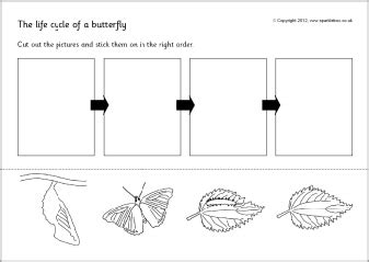 8 best images of butterfly cycle ladybug worksheet