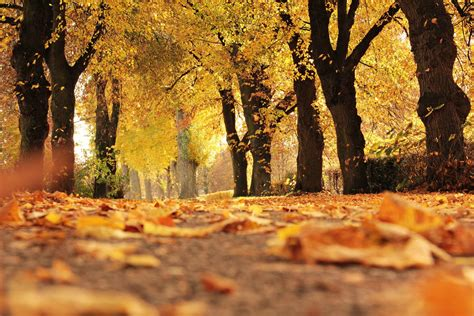 places  fall foliage  maine ogunquit