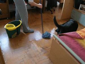 Dog Cleaning GIF - Find & Share on GIPHY