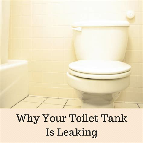 Why Your Toilet Tank Is Leaking  Shop With Me Mama
