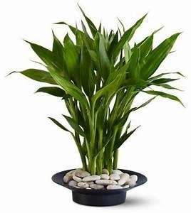 Zimmerpflanzen Feng Shui : feng shui zimmerpflanzen nach den feng shui regeln einrichten ~ Indierocktalk.com Haus und Dekorationen