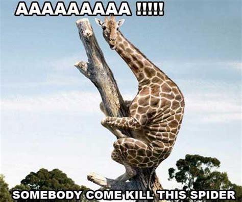 Giraffe Spider Meme - giraffe meme aaaaaaaaaaa somebody come kill this spider picsmine