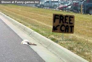 Free Cat - Rude photos dead kitty on a road with stupid sign
