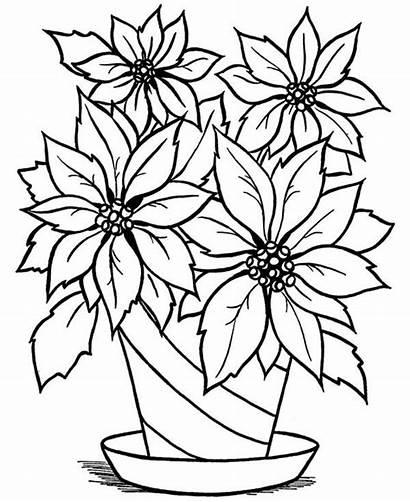Vase Coloring Flowers Flower Blooming Printable Netart