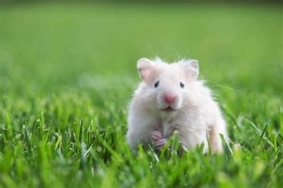 Hamster Wallpapers Theme Tab Cool Mystart Email