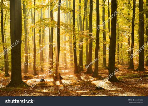 Autumn dawn in magic forest | Magic forest, Magical forest, Forest falls