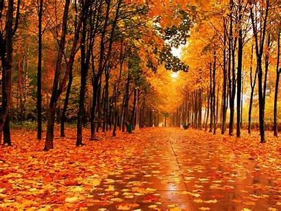 Fall Park Wallpapers Leaves Violence Fascism Autumn