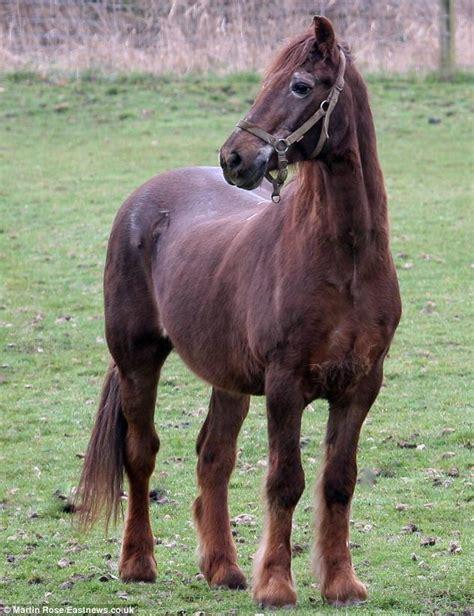 horse oldest irish draught shayne human years horses essex chestnut thoroughbred age liver ever sanctuary trots final furlong sleep living