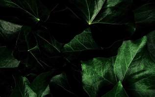 display home interiors green leaves background wallpapers for your desktop