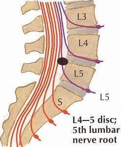 Lumbar L4