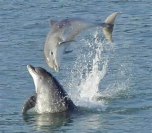 Wildlife near the Ceredigion Coast Path