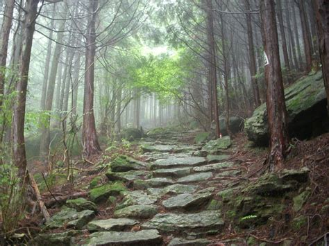 Vitromex Tile Alpine Forest by Ancient Mountain Forest Path By