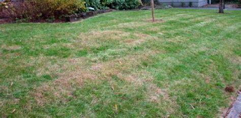 fertilizer burn  lawn grass todays homeowner