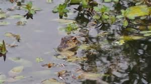 Marsh Landing Adventures Experience Real Florida My