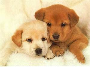 Crazy Pictures: cute puppies images