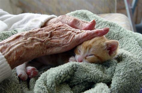 Animals and the elderly   Iowa Now