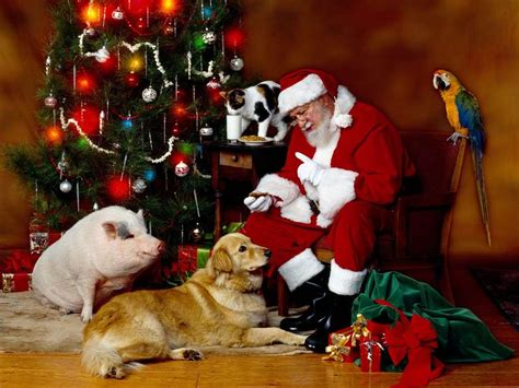 Lustige Videos Weihnachten Kostenlos.Tiere Lustige Videos Kostenlos Herunterladen Handy Weihnachten