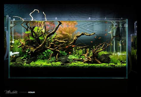 Aquascaping Supplies by Inspiration From Hungary