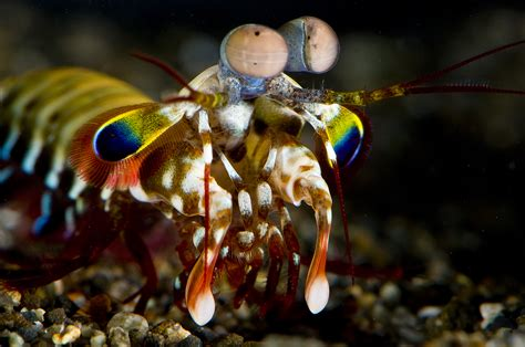 strangest animals  earth