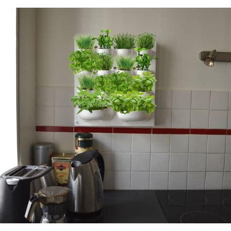 plantes aromatiques cuisine potager mural pour herbes aromatiques