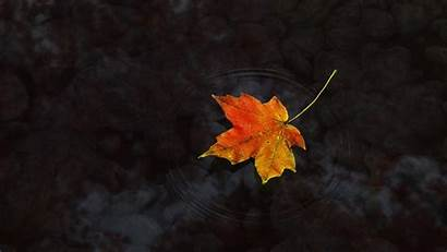 Maple Leaf Wallpapers Widescreen