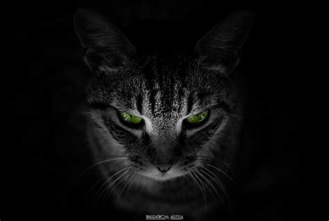Black Animal Wallpaper - cat animals black background green wallpapers hd