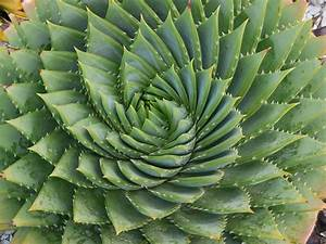 Thorny Plants Tips and Tricks - We've Got Some Points