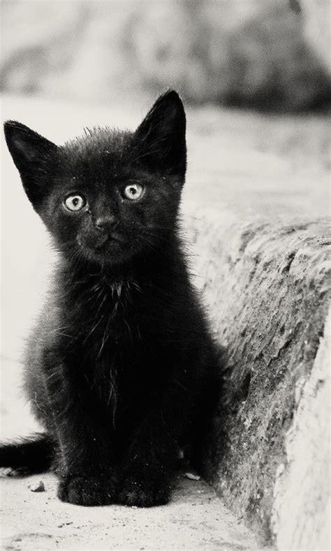 lonely black kitten